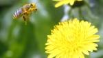 img_606X341_2904-bees-eu-drugs